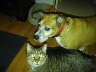 Buster & Paddy ~ Buster the Benevolent Boxer and Paddy the Fur Ball