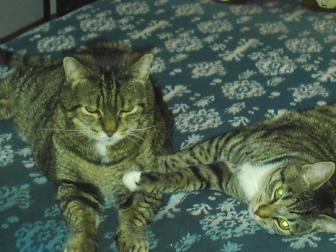 McGregor & Lucy ~ McGregor on the left born April 1996