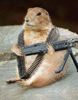 George Armed ~ George, the Comma Sense Class Parliamentarian on duty