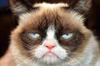 Grumpy Cat ~  No description included.
