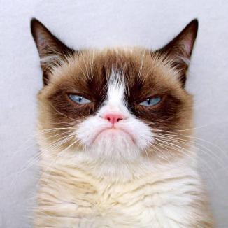 Grumpy Cat Close Up ~  No description included.