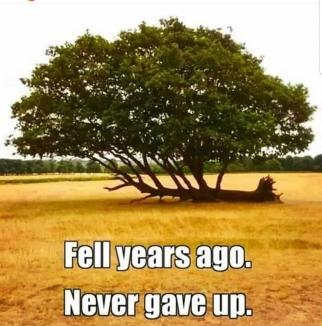 Never Give Up ~