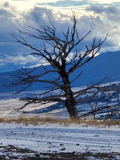 Naked Mountaintop Tree ~ I love taking photo's of things like this!