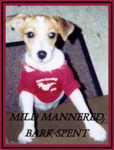 Mild-Mannered Bark Spent
