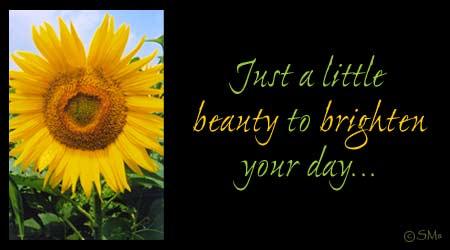 Beauty to Brighten