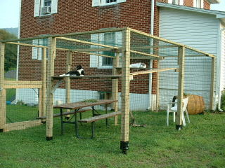 Cat play area for our babies.