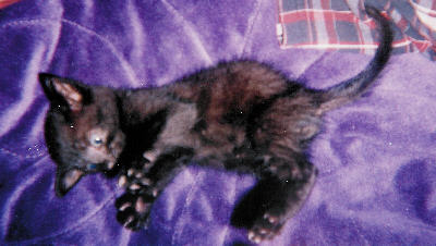 Autumn's baby kitten at four weeks...I think