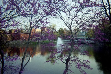 Taken in the Spring of 2004, the fountain is framed by redbud. Emporia, Kansas