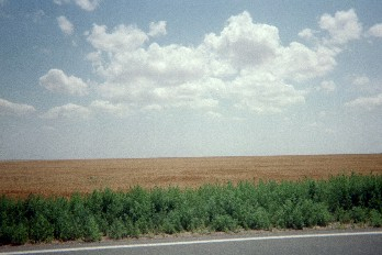 Wheat fields along Route 56 in SW Kansas, July 2004.