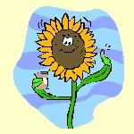a daisy image