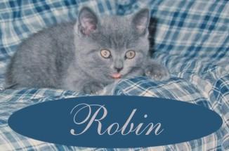 A kitten signature