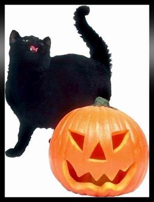 Black cat signature