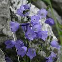 a wildflower in western County Clare ireland
