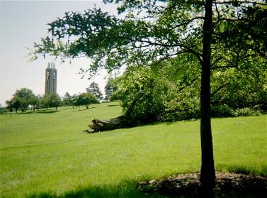 Oak after a storm, 2004