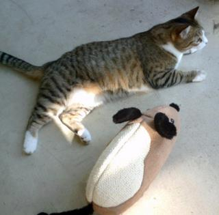 """This is my kitty with her big, fat, scratching """"mouse""""."""