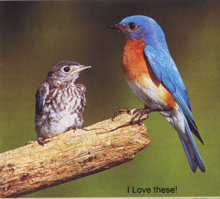 A bluebird for my in & out.