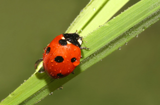 A ladybug for my guest book.