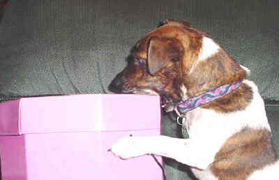 Penny, a Jack Russell is a character in my book, Jack Russells Are People Too!!