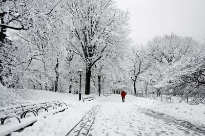 Snow landscape, photo by Maggi Smith from freedigitalphoto's.net