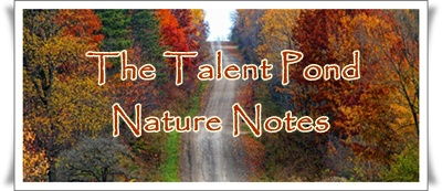 Talent Pond Nature Notes Image