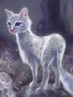 Wierd White Cat