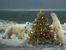 A Christmas Tree and polar bears.