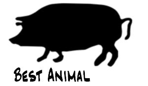 Best Animal!