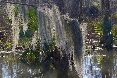 This is the swamp we toured when we visited New Orleans, Louisana
