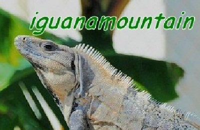 Closer picture of Iguana Portrait