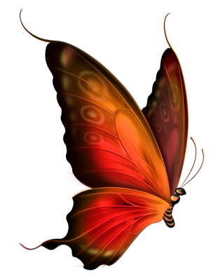 Butterfly for my forum