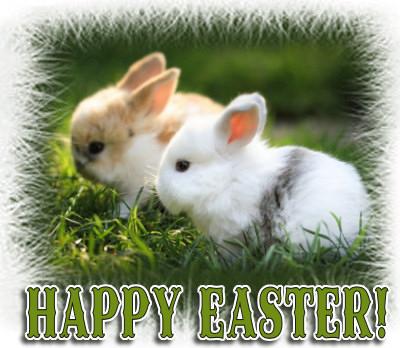 A 'bunny' image