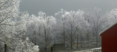 A picture of our back pasture during Winter