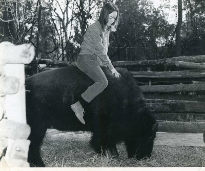 Billy was a buffalo that I raised from a scrawny little calf who was terrified.