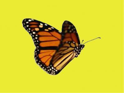 Orange with Yellow bg