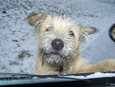 Snowy face hitchhiker