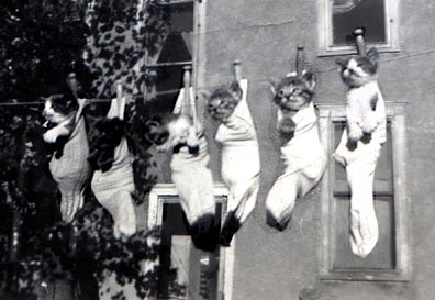 Fun with kittens in this 40s photo from Mom's days in South Dakota.