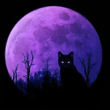 Purple Halloween ~ Black Cat.