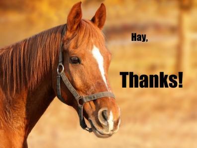 A horse cNote...