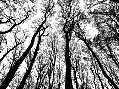 A stark silhouette of bare trees reaching to the sky