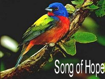 song of hope header