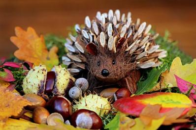 Cute hedgehog picture for use in Verdant Poetry Contest.