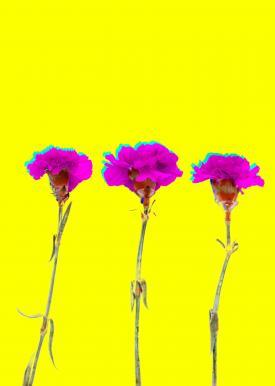 Flower Glitch