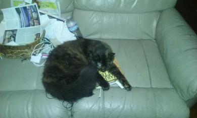 my cat Sabrina.