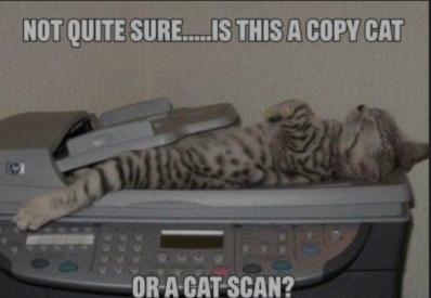 Cat Scan Joke