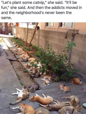 Is this a Catnip Riot?