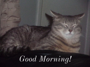 Such a sleepy cat...this cat needs coffee.