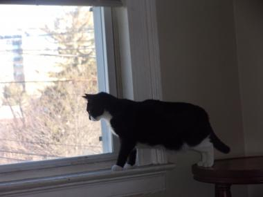 This cat is my grandma's cat named Tiki! He's looking for something through the window.