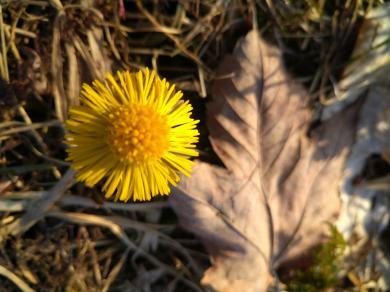 Flower and dead leaf. Original photo, taken April 2021