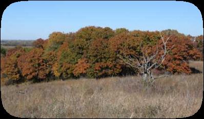 Cross Timbers in Oklahoma