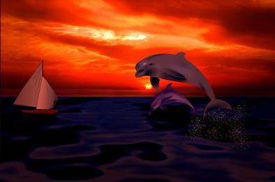Dolphins at Sail ~ Raffle